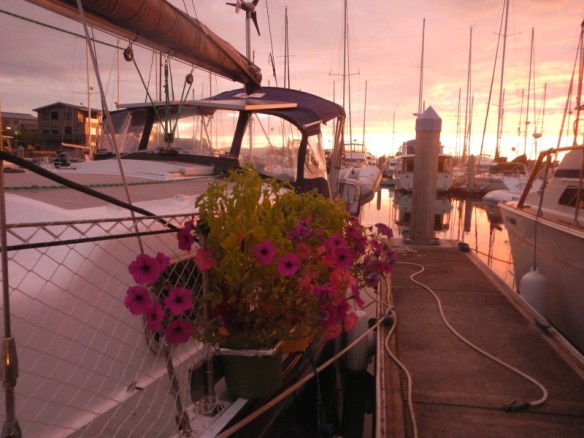 Mini boat garden