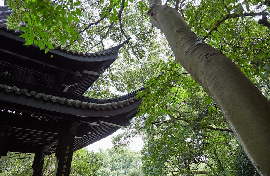Pagoda and Tree