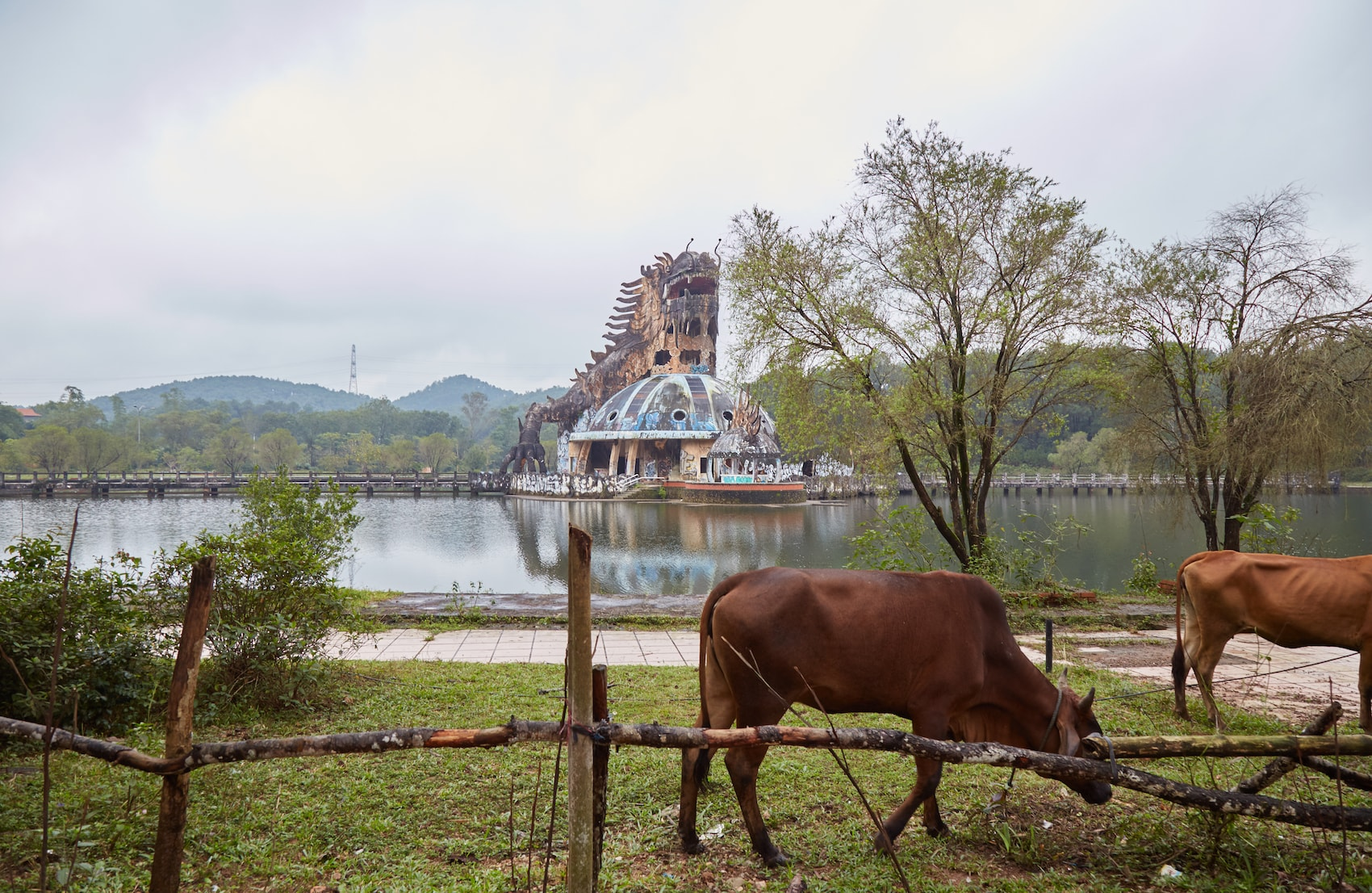 Ho Thuy Thien Cows and Dragon