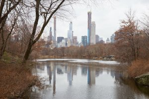NYC Central Park The Ramble