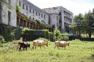 Hotel Savane Tskaltubo