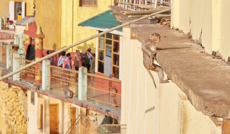 Bagan Monkeys