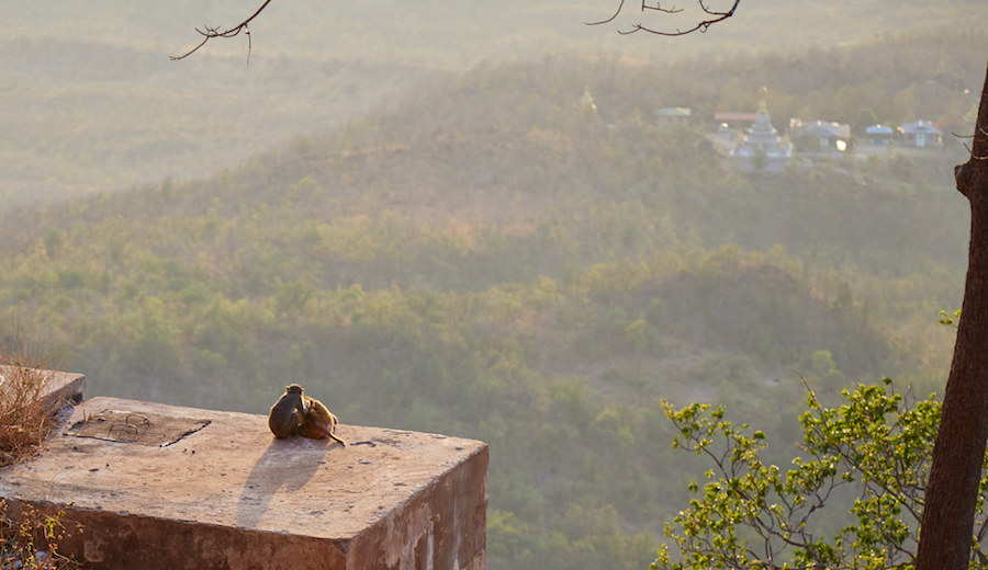 Monkeys Enjoying Mt. Popa View