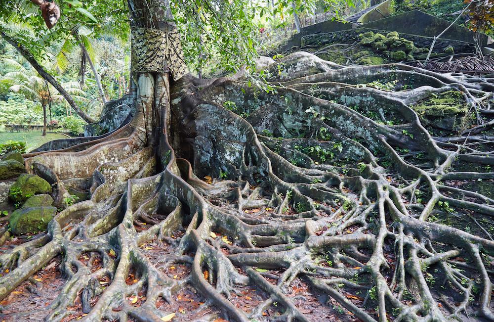 Goa Gajah Tree
