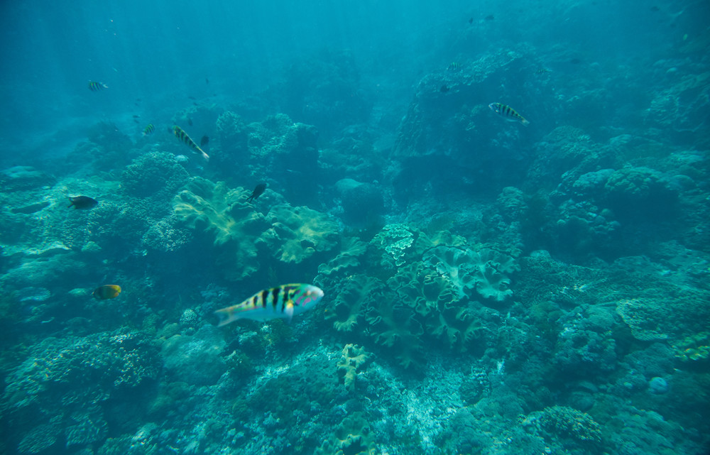 what to do in nusa lembongan snorkeling
