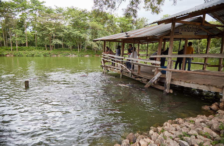 Sala Keoku Fish Pond