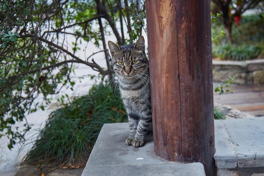 Nanxun Cat