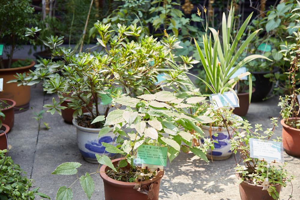 Medicine Museum Herbs