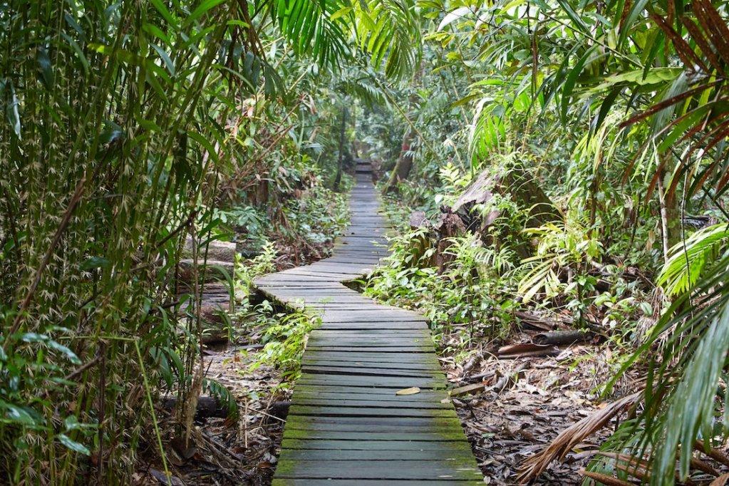 Bako National Park T. Delima Trail