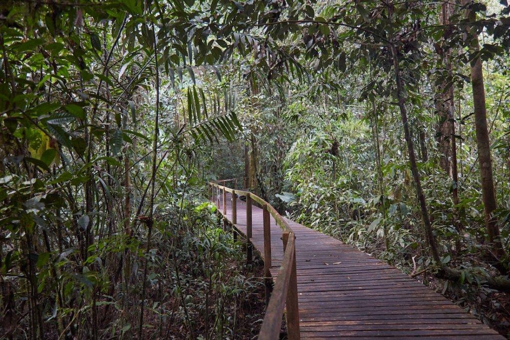 Mulu National Park Trails