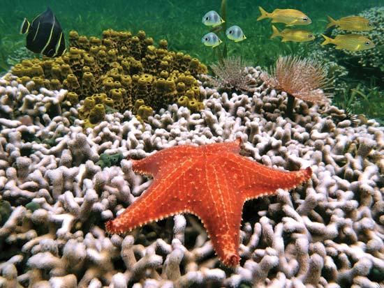 coral-reef-bleaching in maui
