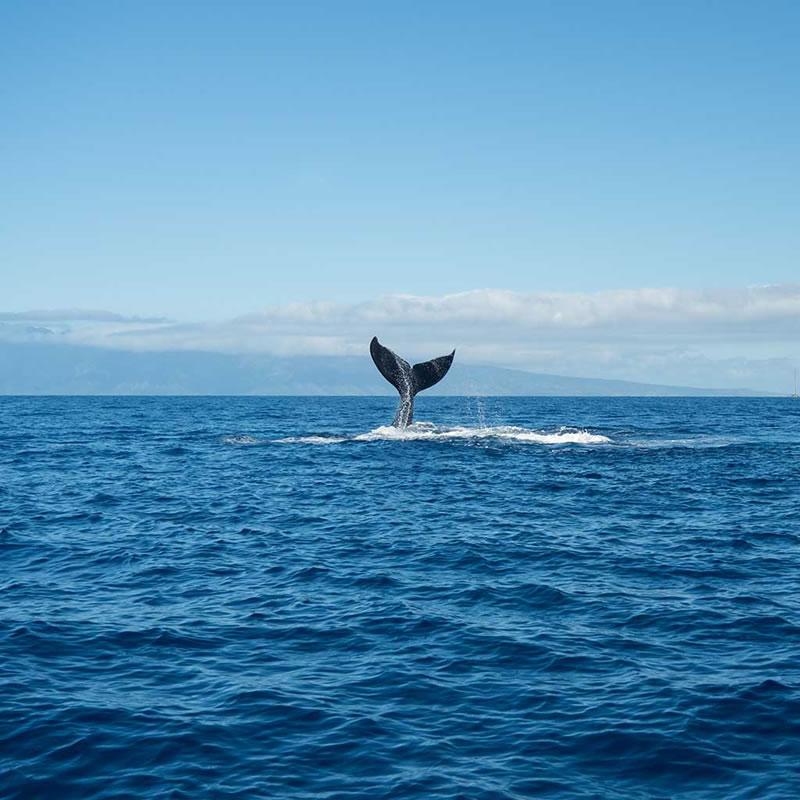 whale-watching-maui