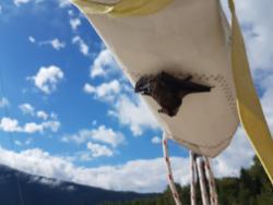 Bats! Hello cutie