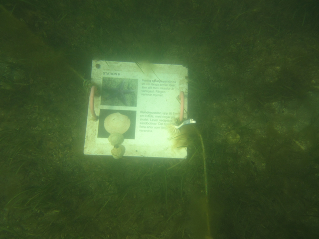 Underwater info on the snorkeling trail
