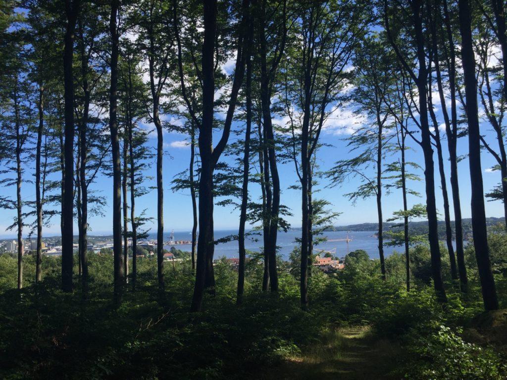 Larvik beech forest