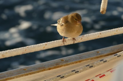 Vogeltje, our little stowaway