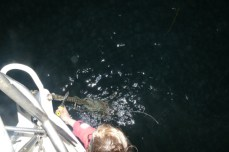 Fishing gear in the anchor chain