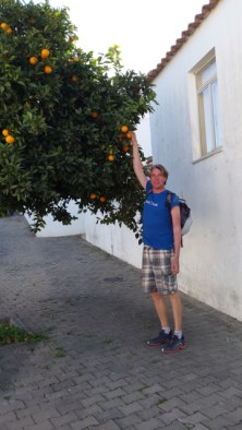 Ivar picking fresh oranges