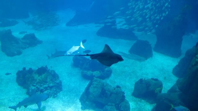 Majestic sea creatures in Lisbon ocean aquarium