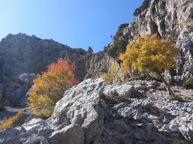 Autumn in the White Mountains
