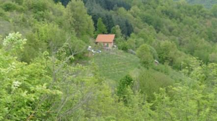Pietro's permaculture estate