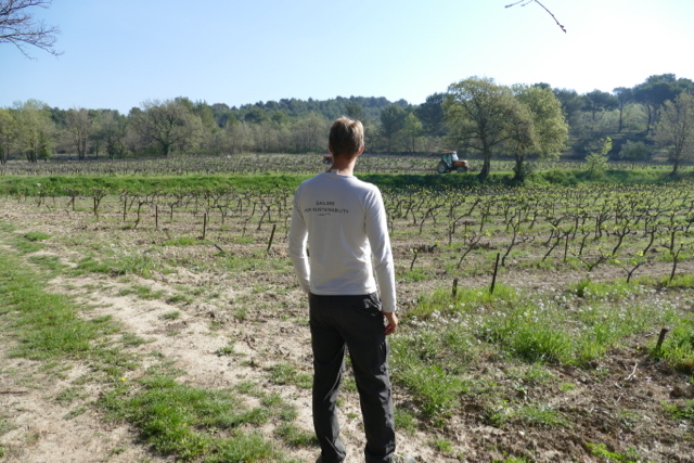 Vineyard at Domaine de La Gasqui