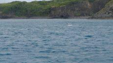 Spot the Spinner Dolphin