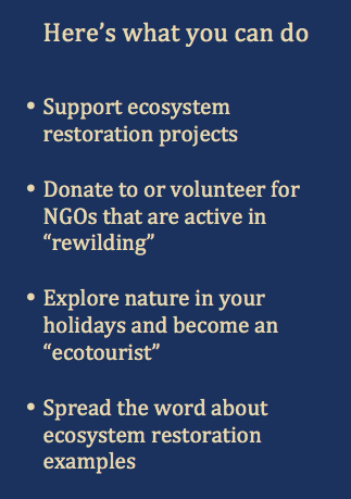 Here's what you can do - Rewilding