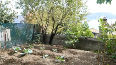 Ted's permaculture garden