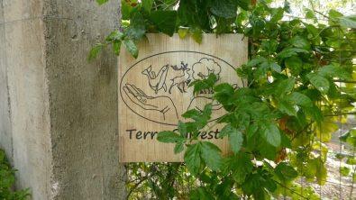Terra Sylvestris