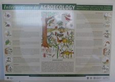 Agroecology explained