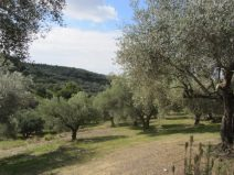 At the olive grove