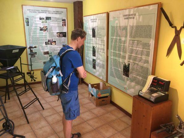 Inside the banana museum