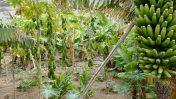 Papayas and bananas