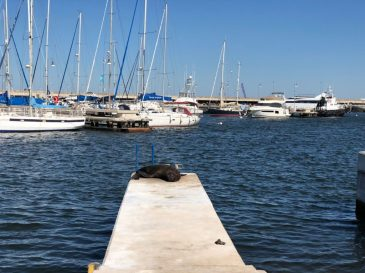 Sea lion resting pontoon
