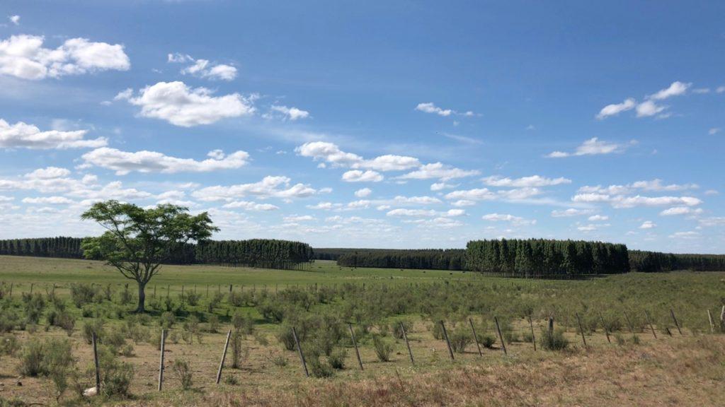 Uruguay plains with eucalyptus monoculture