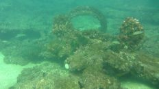 Coral grows on the wreck