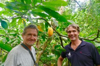 Ernst Götsch's cocoa trees get the right amount of shade