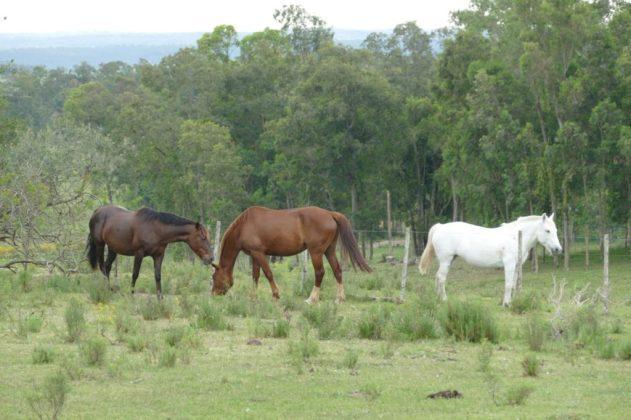 Alda's horses