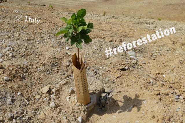 Reforestation on Steroids (ITA)