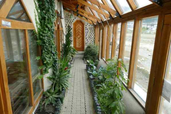 Many edible plants grow in the hall