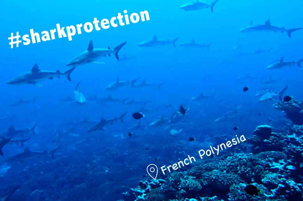 Saving Sharks with Sanctuaries (PYF)