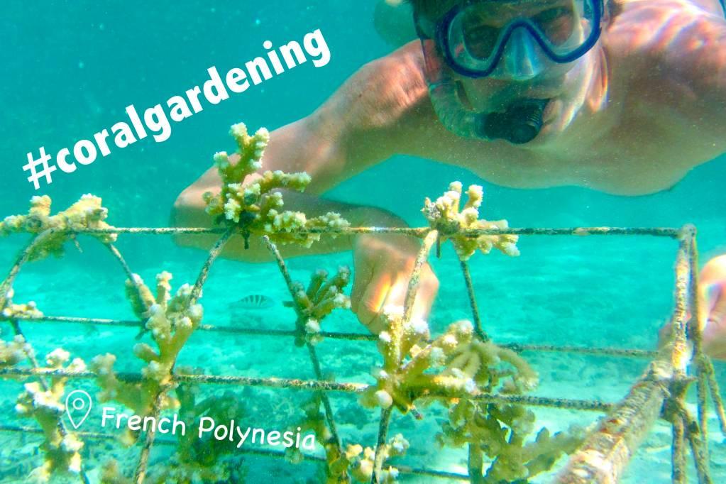 Coral Gardening (PYF)