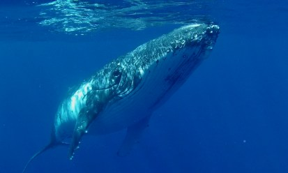 Up close and personal with a Humpback Whale