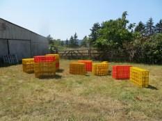 cleant transport crates...