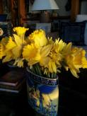 10313043_10152863180426843_8856152501374077179_n Daffodils from timeline