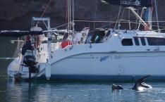 Lobo Bay 5