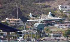 Gull on Solar Panels 2
