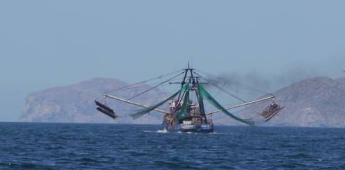 Stinky Shrimp Boat