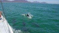 Dolphin Group San Carlos 2